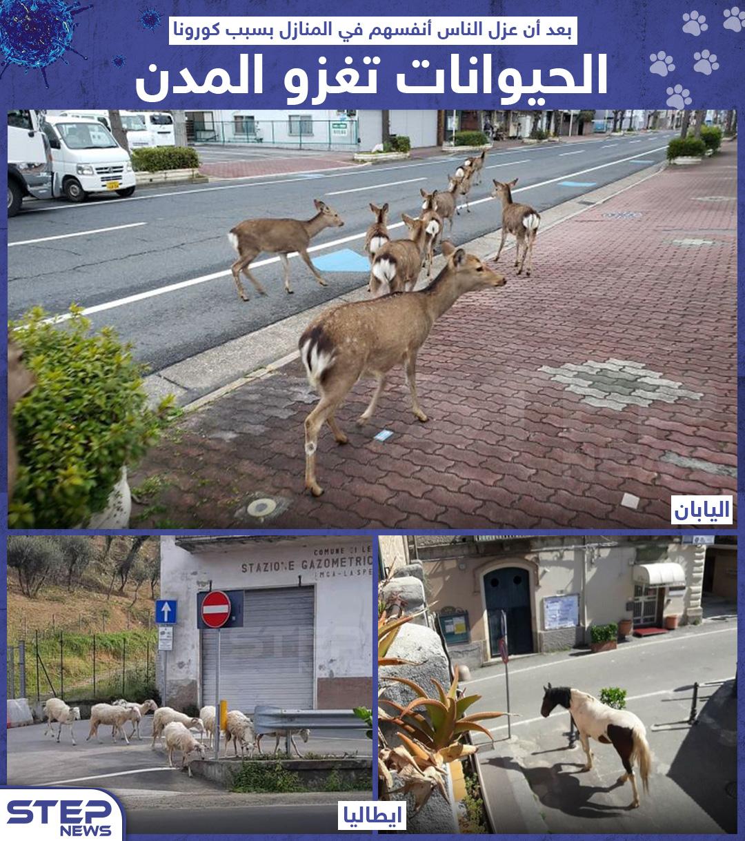 الحيوانات تغزو المدن بعد عزل الناس أنفسهم بالمنازل إثر جائحة كورونا