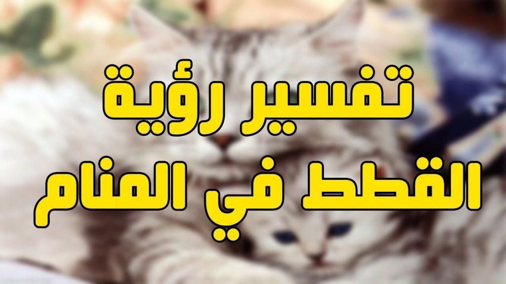 تفسير رؤيه القطط في المنام وكالة ستيب الإخبارية