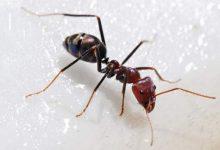 رؤية النمل في المنام