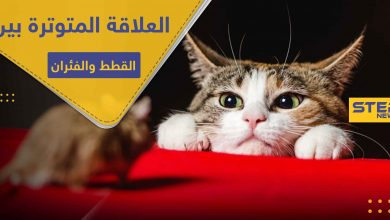 هل تسائلت عن سبب العلاقة المتوترة بين القطط والفئران .. دراسة تكشف السر