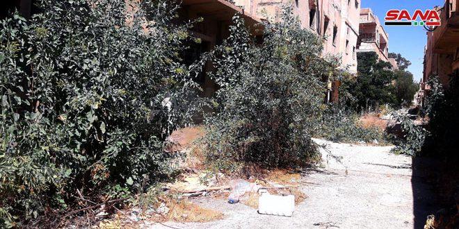 بالصور|| ظهور شجرة غريبة لأول مرة في سوريا.. وتحذيرات من خطرها القاتل
