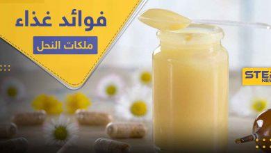 غذاء ملكات النحل لعمر مديد وصحة وشباب دائم