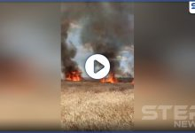 fire crops 204062020