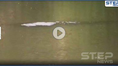 بالفيديو|| ظهور وحش أسطوري غامض في إحدى بحيرات الصين بطول 10 أقدام
