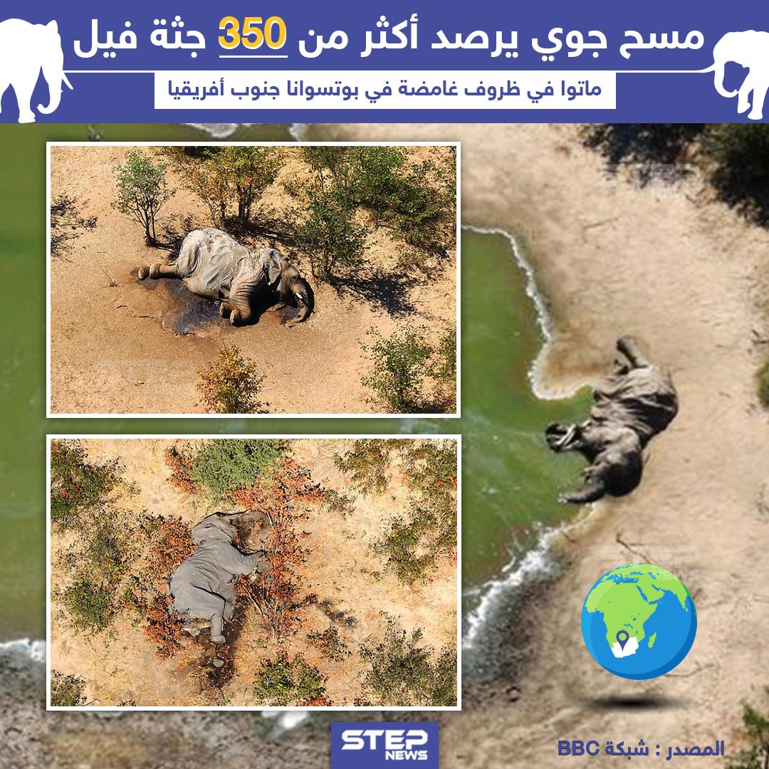 موت 350 فيل في ظروف غامضة بجنوب أفريقيا