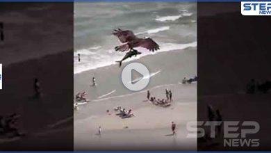 بالفيديو|| طائر جارح يصطاد سمكة قرش كبيرة.. ويحلق طائرا بها في السماء
