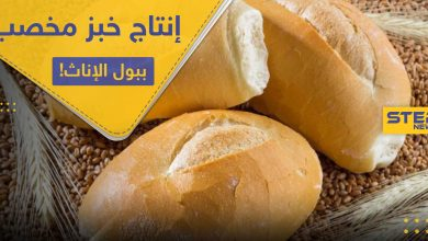 فرنسا تبدأ بإنتاج خبز مخصب بـ بول الإناث.. والتفاصيل!