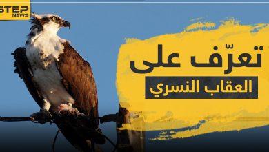eagle 206072020