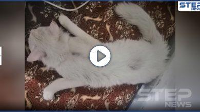 rape cat 222072020 1
