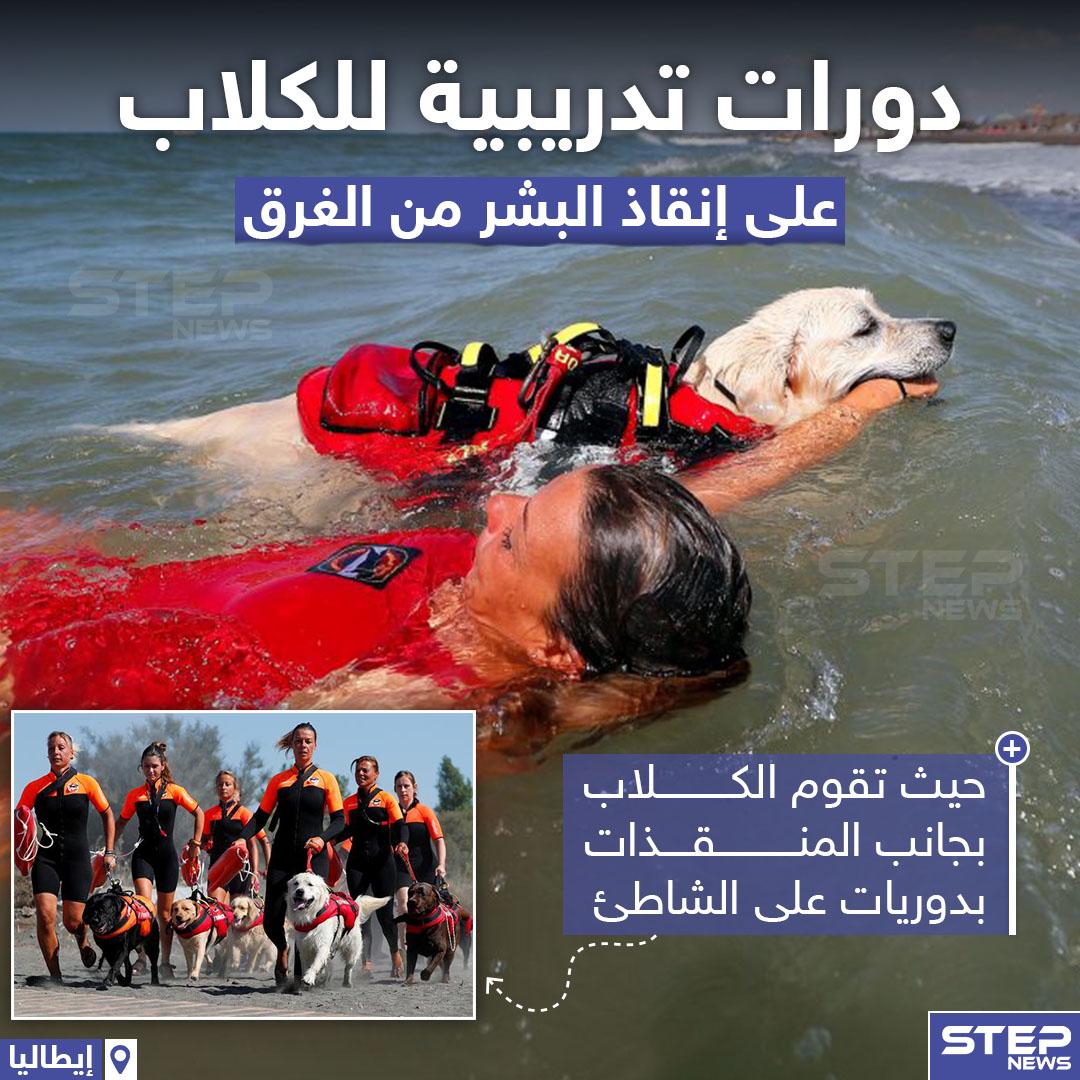 دورات تدريبية للكلاب على إنقاذ البشر من الغرق