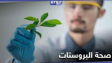للحفاظ على صحة البروستات وتعزيز الرغبة الجنسية والخصوبة.. إليك هذا المستخلص النباتي