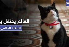 في يوم القطط العالمي.. قط الخارجية البريطانية يستقيل من منصبه والأخيرة توضح الأسباب