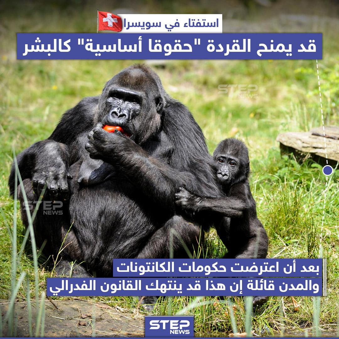 """استفتاء في سويسرا يَمنح القردة """"حقوقاً أساسية"""" كالبشر"""