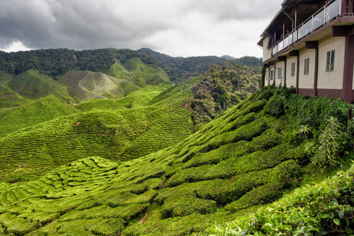 السياحة في ماليزيا - مرتفعات الكاميرون