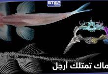 بالصور|| اكتشاف علمي حديث.. هذه الأنواع من الأسماك تمتلك أرجل وتمشي على الأرض