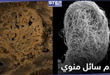 شاهد|| اكتشاف أقدم سائل منوي حيواني حتى الآن عمره 100 مليون عام!