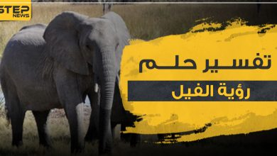 تفسير حلم الفيل
