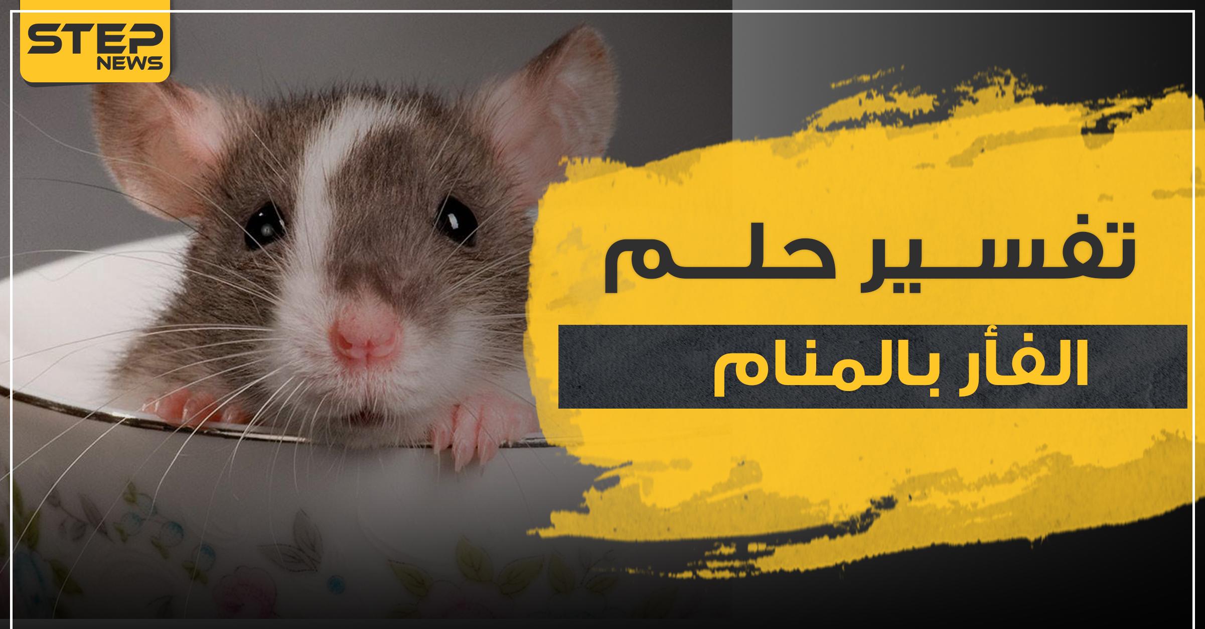 تفسير رؤيا الفأر بالمنام حسب 3 رويات وبأكثر من موضع وكالة ستيب الإخبارية