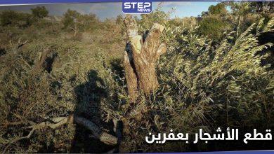 """للتدفئة والتجارة.. أشجار الزيتون بعفرين تقطعها فصائل من """"الجيش الوطني"""""""
