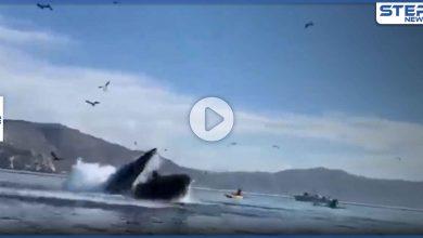 بالفيديو|| حوت ضخم يبتلع زورقاً وعلى متنه راكبتَين في أمريكا