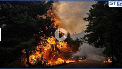 بالفيديو|| حرائق ضخمة في الجزائر تجتاح مدناً عدة وتسقط ضحايا.. والسلطات توضح
