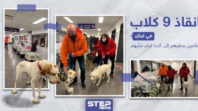إنقاذ 9 كلاب في لبنان و تأمين سفرهم إلى كندا ليتم تبنّيهم
