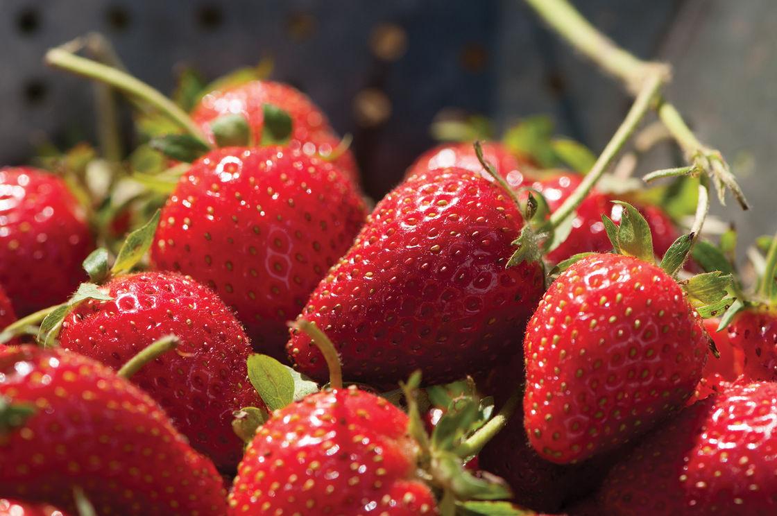 الفواكهة المفيدة للحامل
