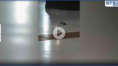 بالفيديو|| طائر وسط المسجد الحرام يقدم على فعل غير مسبوق أمام الكعبة