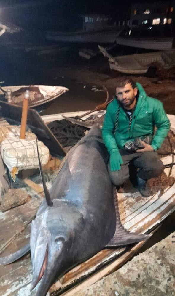 لبناني يصطاد سمكة نادرة وضخمة بطول 3 أمتار من شواطئ عكار