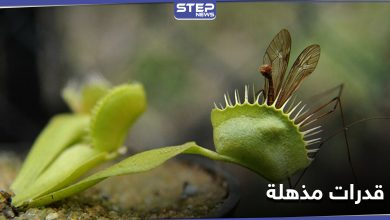 """بقدرات يمتلكها البشر... نباتات المفترس """"صائد الذباب"""" تدهش العلماء بقدراتها الفريدة"""