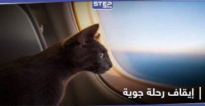 """قطة """"متطفلة"""" تجبر طاقم طائرة عربية على استقطاع رحلتها والهبوط في العاصمة السودانية"""