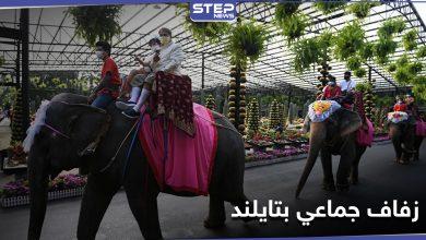 بالصور|| في يوم عيد الحب... زفاف جماعي على ظهور الأفيال في حديقة استوائية بتايلاند