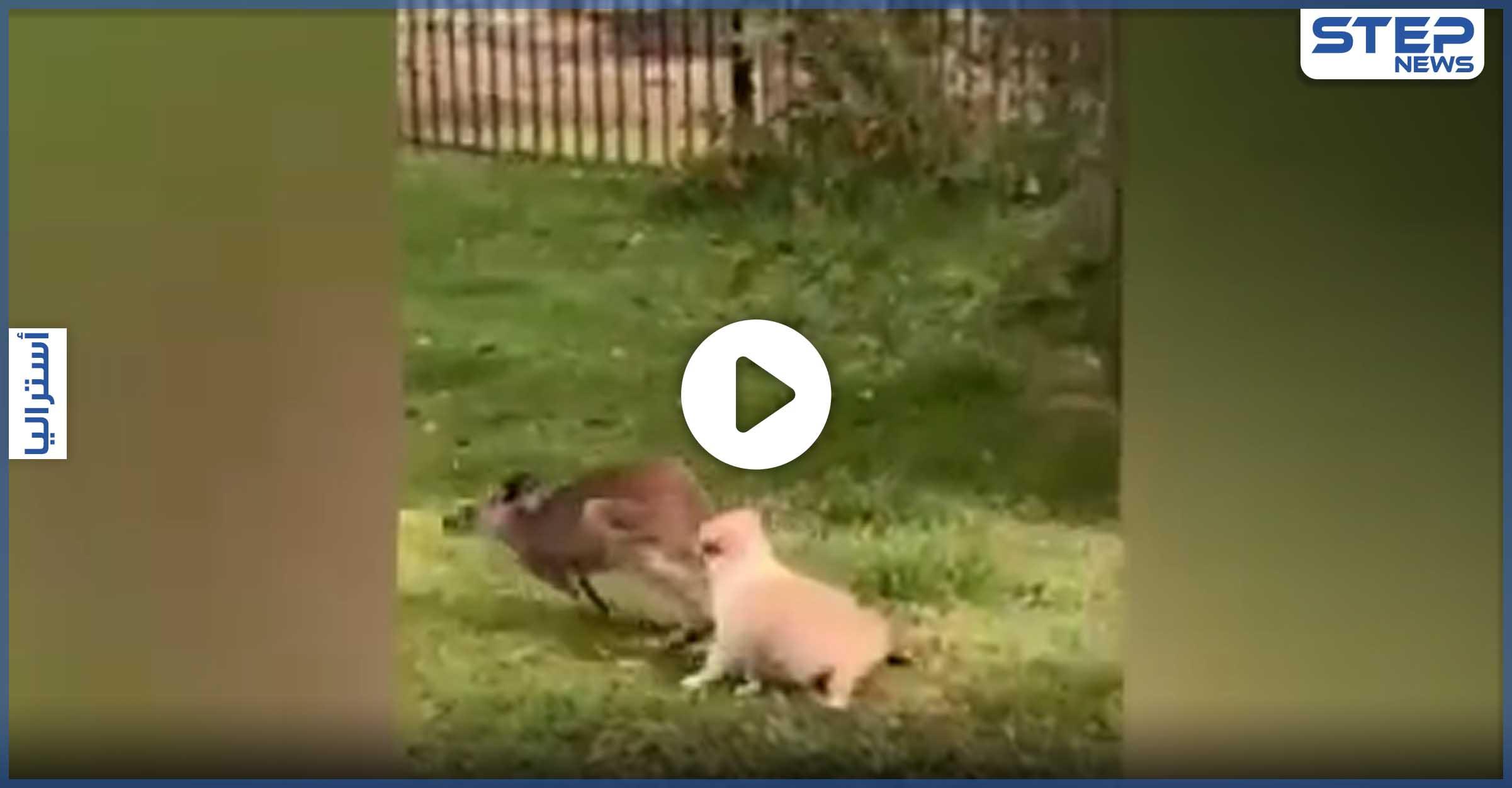 كنغر وكلب