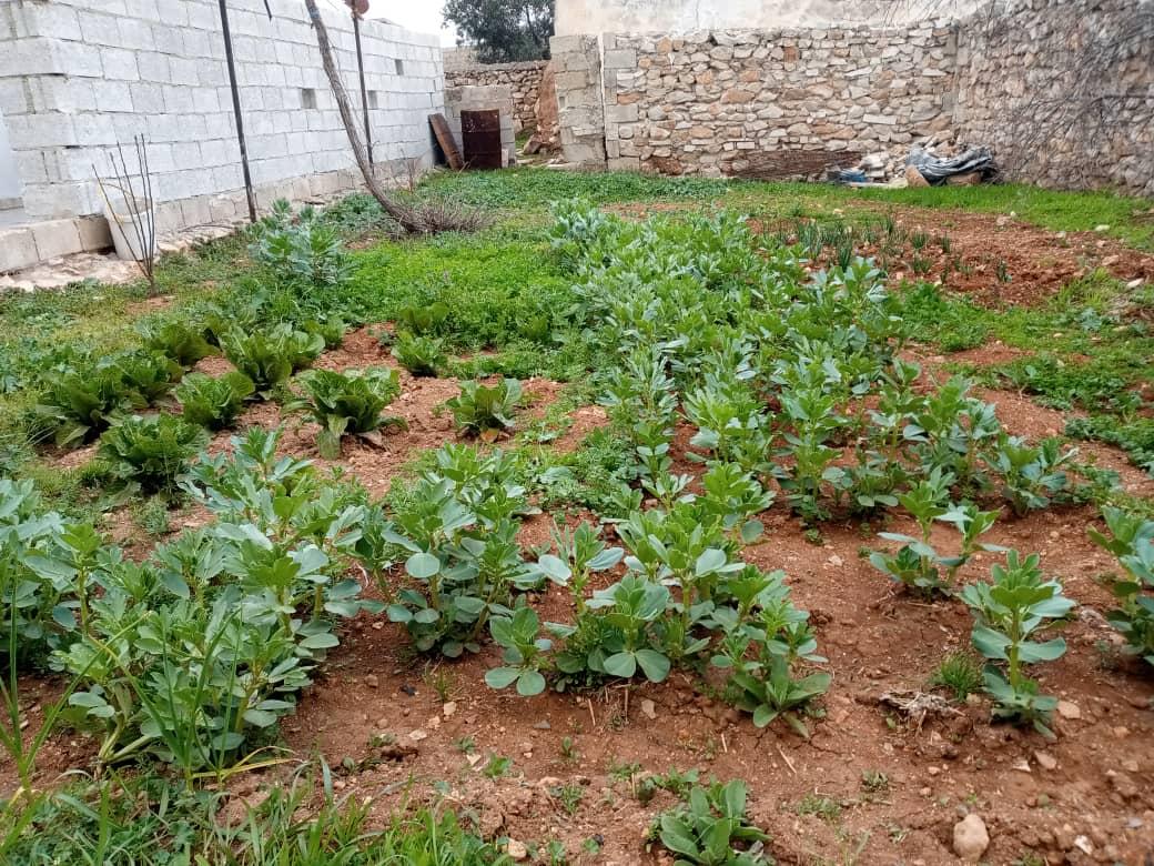 أحواض للزراعة المنزلية في قرية الدار البيضاء بريف حمص الشمالي