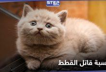 cats 203032021 1