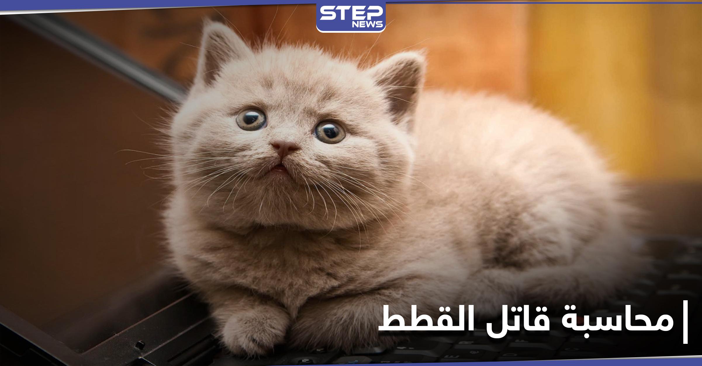 غضب في الكويت بعد قتل قطتين صغيرتين بطريقة مستفزة على يد مواطن ومطالبات بمحاسبته