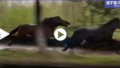 حصان يلاحق آخر