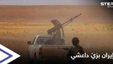 الميليشيات الإيرانية ترتدي الزي الداعشي وتسلب الأغنام في دير الزور