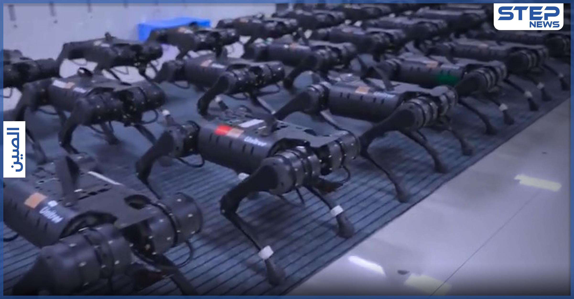 بالفيديو|| روبوتات بأربع أرجل تتحرك بانسجام بشكل مفزع تثير الجدل على منصات التواصل