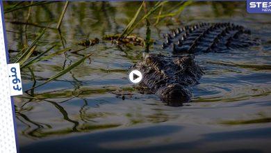 تمساح متوحش