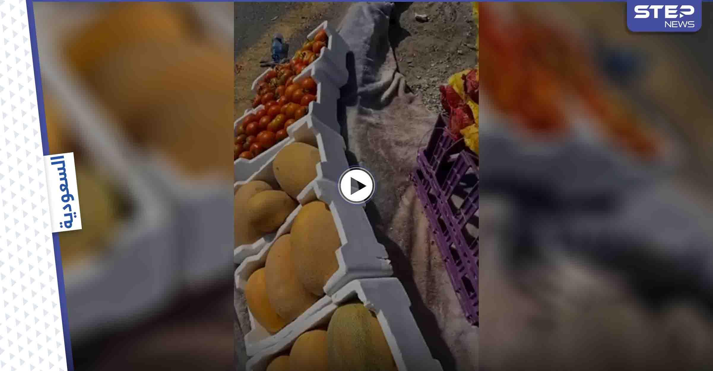 بالفيديو|| مواطن يحرج بائعة خضار مسنة ويقوم بتصويرها والتنمر عليها.. وإجراء قانوني عاجل بحقه