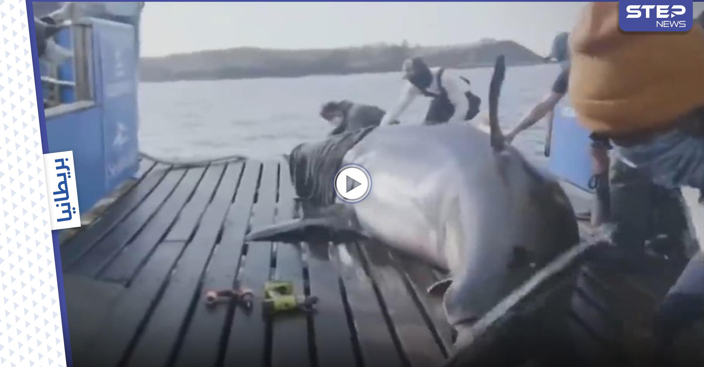 علماء بريطانيون يتمكنون من اصطياد ملكة المحيط ووضع جهاز تعقب عليها (فيديو)