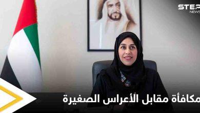 """""""عرس صغير"""" مقابل منحة كبيرة.. قرار جديد في الإمارات"""