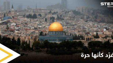 """""""غرد كأنها حرة"""" صورٌ من الحياة في فلسطين وأرجائها الحرة يطلقها رواد مواقع التواصل"""