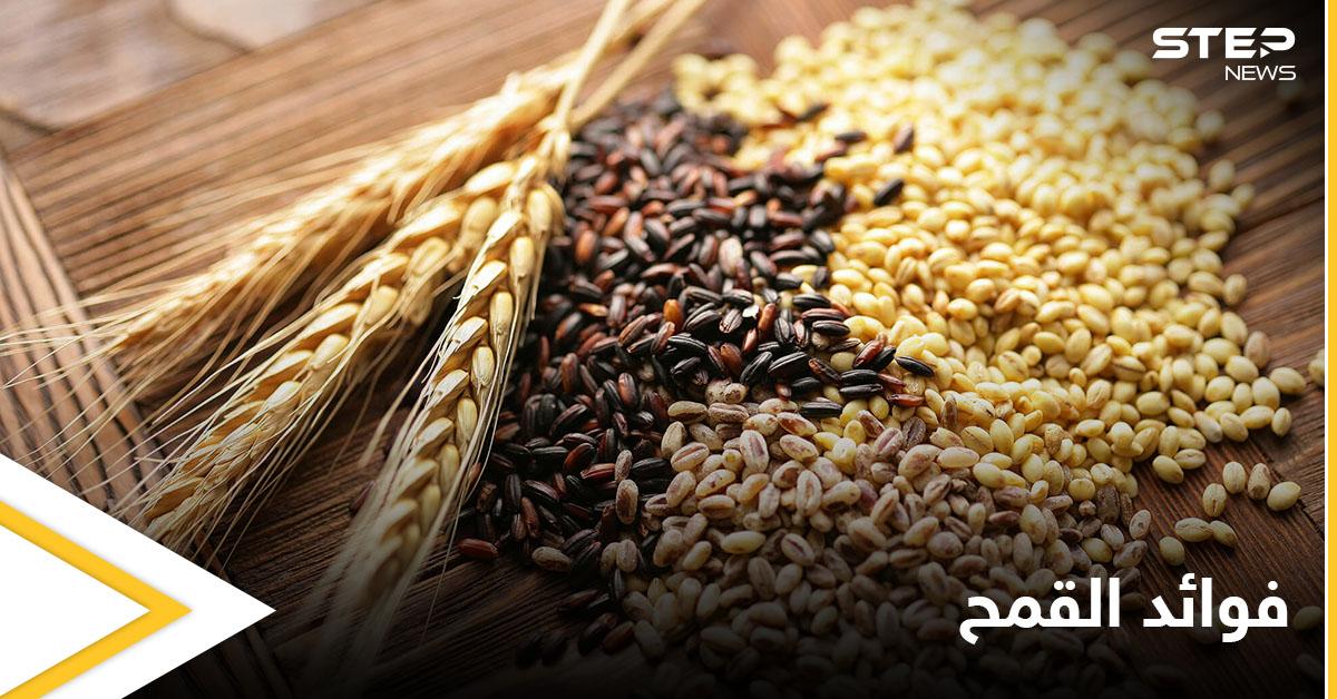 القمح النبات الأكثر شهرة في العالم