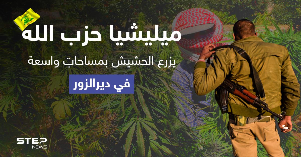 """بمعاونة النظام السوري.. """"حزب الله"""" يزرع الحشيش بمساحاتٍ واسعة في دير الزور"""