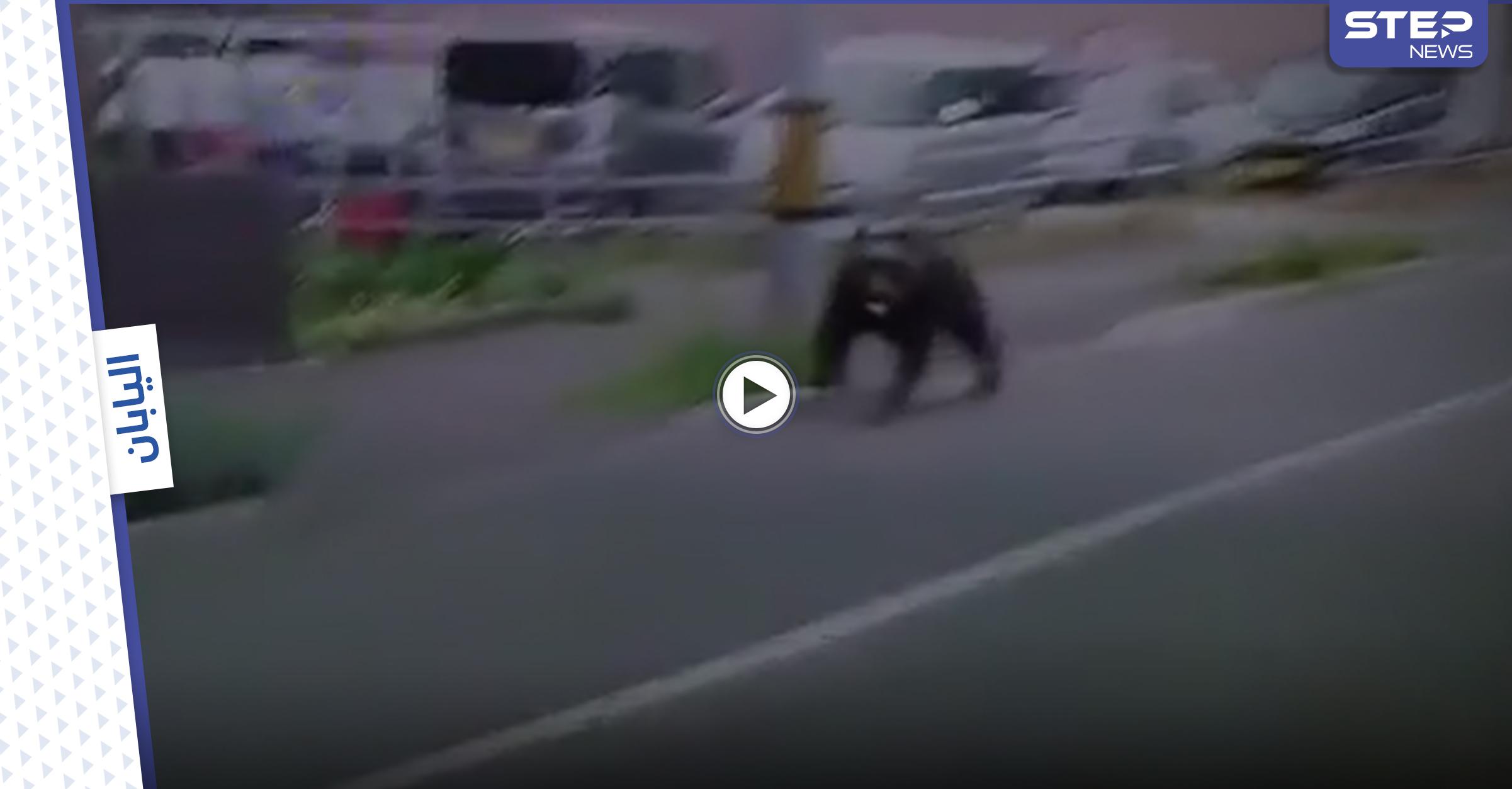 بالفيديو|| دب غاضب يقتحم معسكراً في اليابان ويصيب 4 أشخاص والسلطات تطلق النار عليه