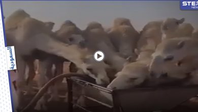 camel 209062021