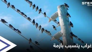 crow 21306021