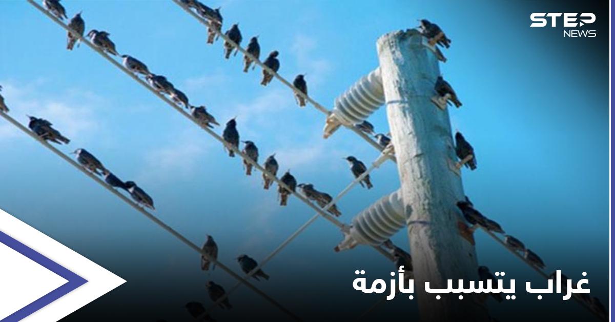 غراب يتسبب بإغراق عاصمة عربية في الظلام الدّامس وإحالة مسؤولين للتحقيق